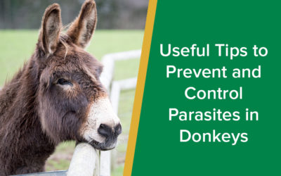 Useful Tips to Prevent and Control Parasites in Donkeys