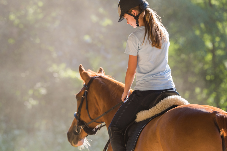 Equine Vet services at Parkside Vets in Dundee