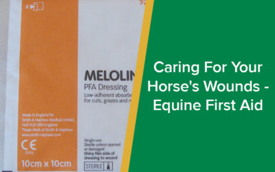 Caring For Your Horse's Wounds - Equine First Aid