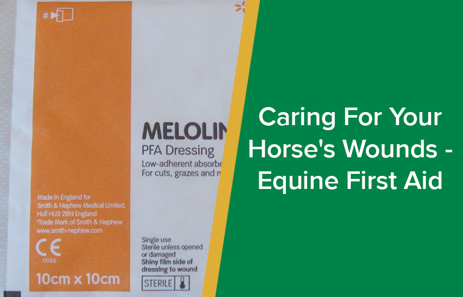Caring For Your Horse's Wounds – Equine First Aid