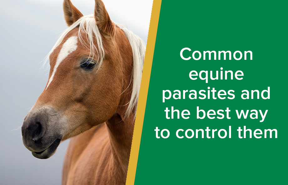 Common equine parasites and the best way to control them