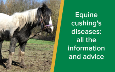 Equine cushing's diseases: all the information and advice