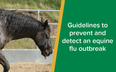 Equine flu outbreak: best guidelines to prevent it