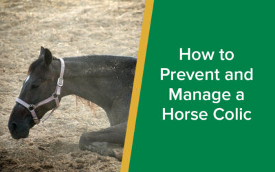 How to Prevent and Manage a Horse Colic