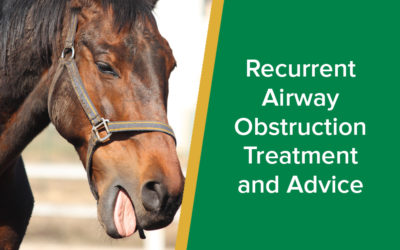 Recurrent Airway Obstruction Treatment and Advice