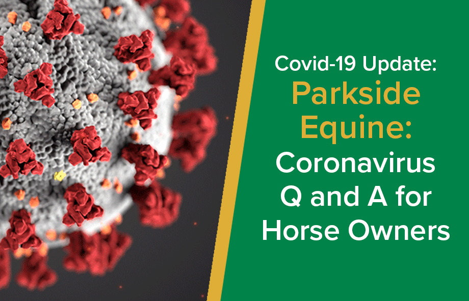Coronavirus Q&A for horse owners | Parkside Equine Vets