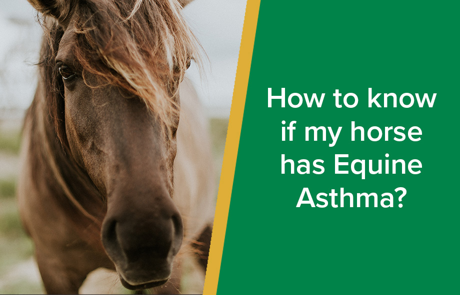 How to know if my horse has Equine Asthma?