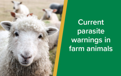 Current Parasite Warnings in Farm Animals