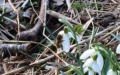 Bee Blog - February - Venturing Outside