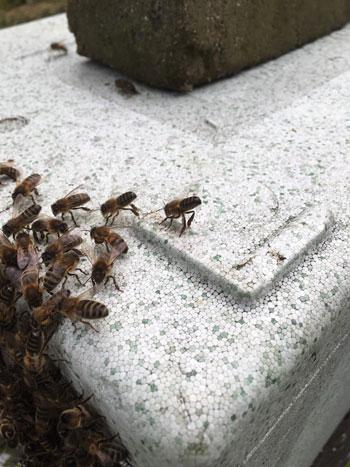 parkside-vets-bee-blog-july-signalling