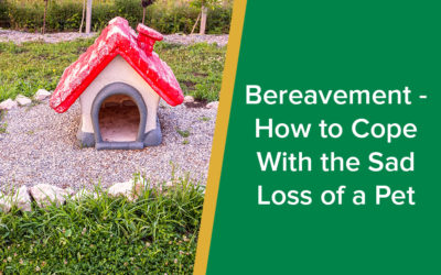 Bereavement - How to Cope With the Sad Loss of a Pet