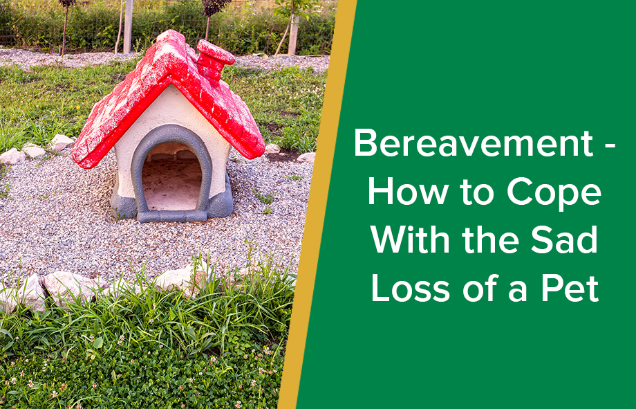 Bereavement – How to Cope With the Sad Loss of a Pet