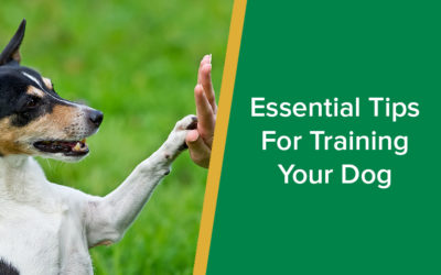 Essential Tips For Training Your Dog