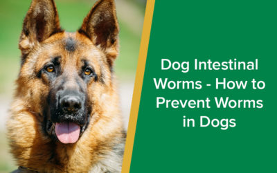 Dog Intestinal Worms - How to Prevent Worms in Dogs