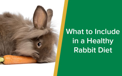 What to Include in a Healthy Rabbit Diet