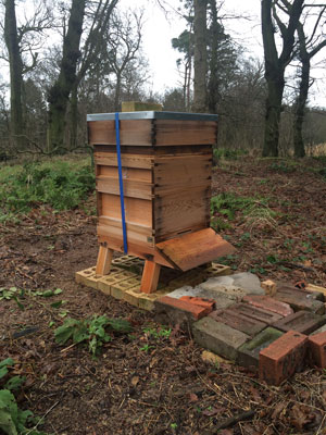 Bee Blog - Winter Hive Check