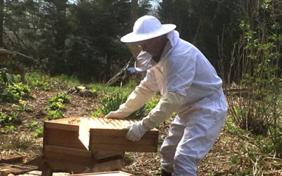 Bee Blog - April - First Opening of The Hives
