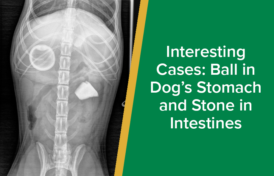 Interesting Cases: Ball in Dog's Stomach and Stone in Intestines