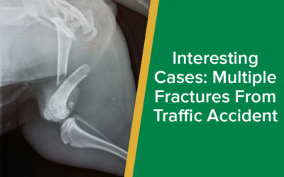 Interesting Cases: Dog Multiple Fractures from Traffic Accident