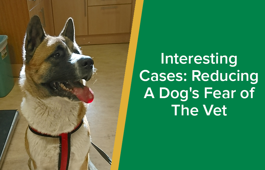 Interesting Cases: Reducing A Dog's Fear of The Vet
