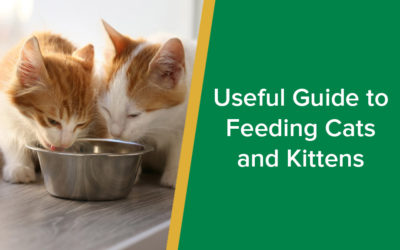 Useful Guide to Feeding Cats and Kittens
