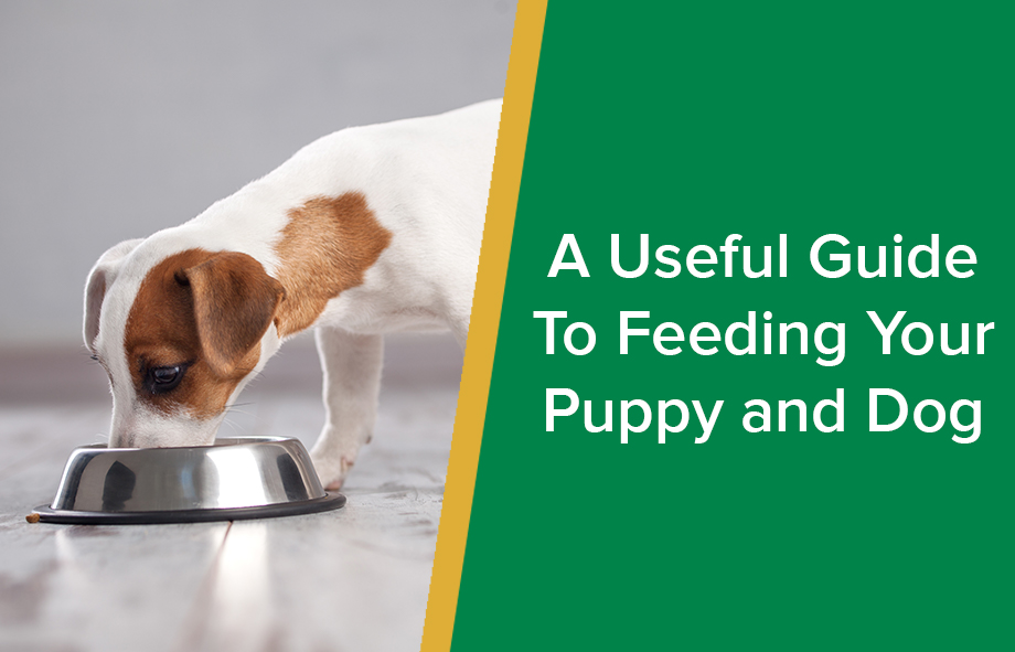 A Useful Guide To Feeding Your Puppy and Dog