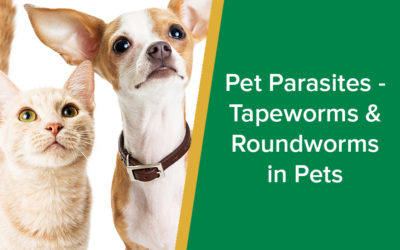 Pet parasites – tapeworms and roundworms in pets