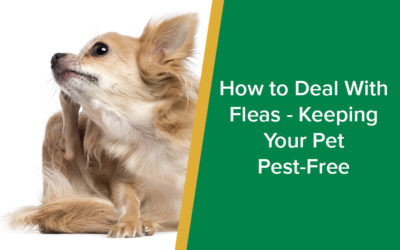 How to Deal With Fleas - Keeping Your Pet Pest-Free