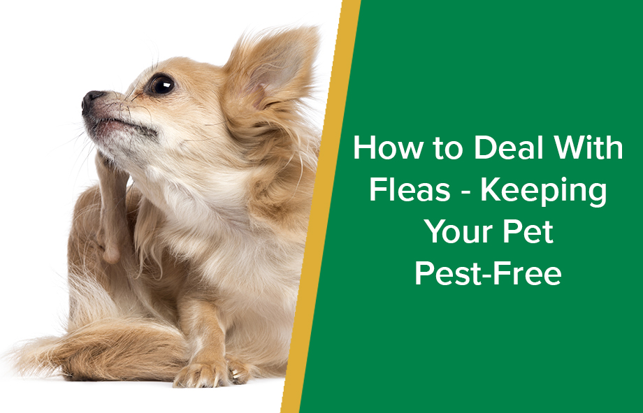 How to Deal With Fleas – Keeping Your Pet Pest-Free
