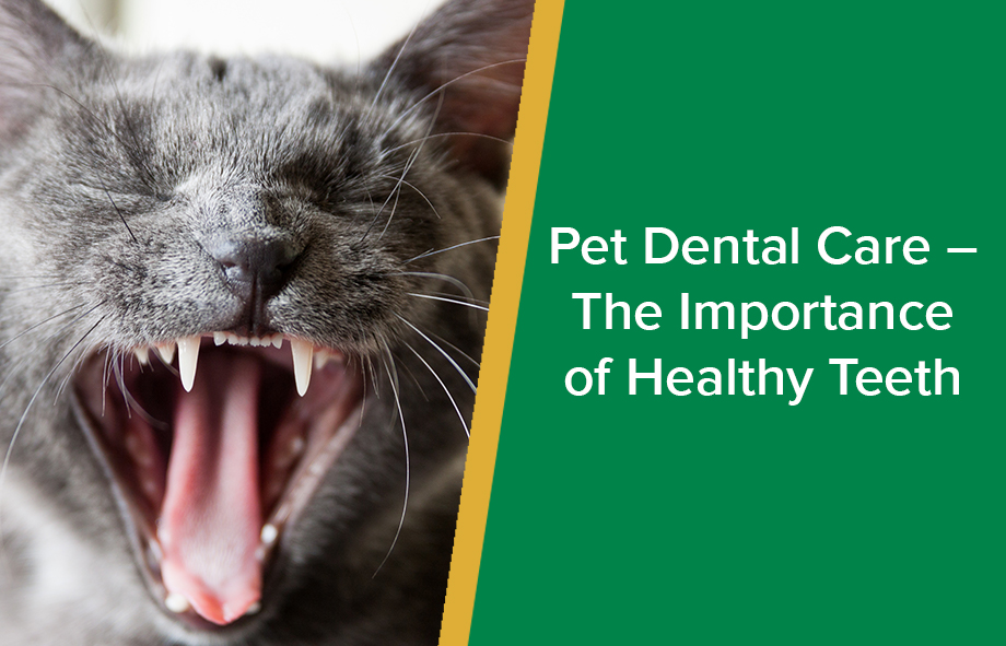 Pet Dental Care – The Importance of Healthy Teeth