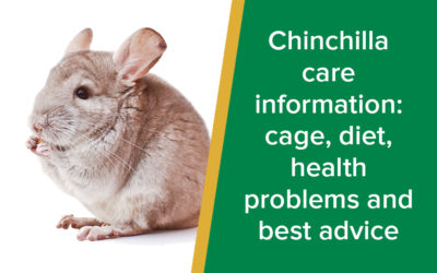 Chinchilla Care: Cage, Diet, Health Problems and Best Advice