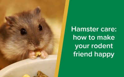 Hamster Care: How to Make Your Rodent Friend Happy