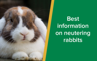Best information on neutering rabbits