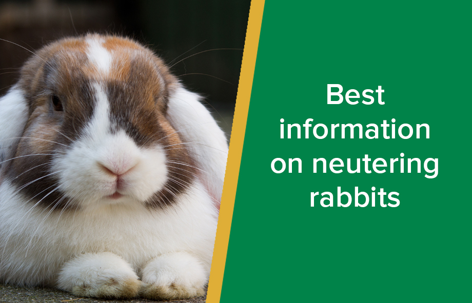 Best information on neutering rabbits