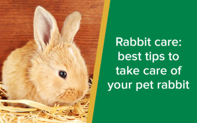 Rabbit care: best tips to take care of your pet rabbit