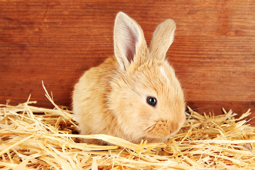 Rabbit care - Parkside Vets