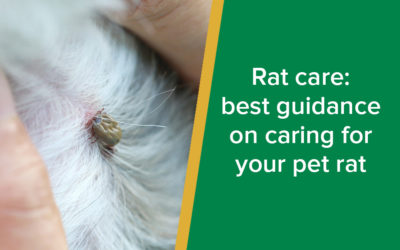 Pet parasites: How to deal with ticks on dogs and cats