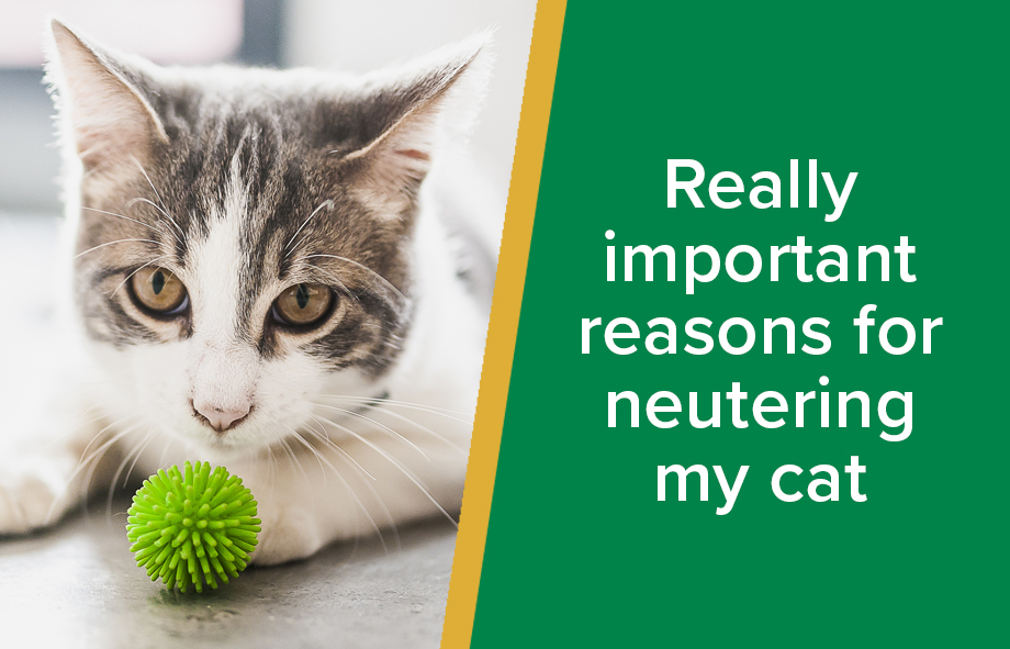 Really important reasons for neutering my cat